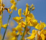 La vida es bella porque tu estás en ella (Flors; Sant Cugat, maig 2011) 027