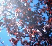 Primavera (L'Atmella, març 2012)