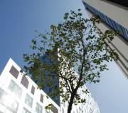 Alto nivel de confianza, costes bajos (22@, Barcelona, octubre 2010)