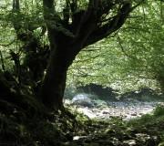Deja la vida como es... (Renedo, Cantabria, julio 2003)