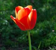 No más ni menos que una simple flor... (Montjuic, Barcelona, abril 2014)